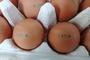 """8개 농가 계란서 살충제 대사산물 검출… """"전량 폐기, 유통 차단"""""""