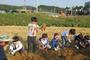 흙에서 고구마가 줄줄이...1000명 농부체험