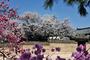[LIFE] '코로나 블루', 봄풍경 담은  온라인 영상과 사진으로 해소