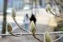 출근길 날씨, 쌀쌀·일교차 10~20도 건강주의'…꽃샘추위·눈내린곳 살얼음주의(오늘날씨)