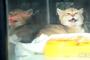 광주 확진자 고양이 1차 양성 판정…정밀검사 의뢰