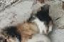 올림픽공원 고양이 떼죽음…수사 진전없이 종결
